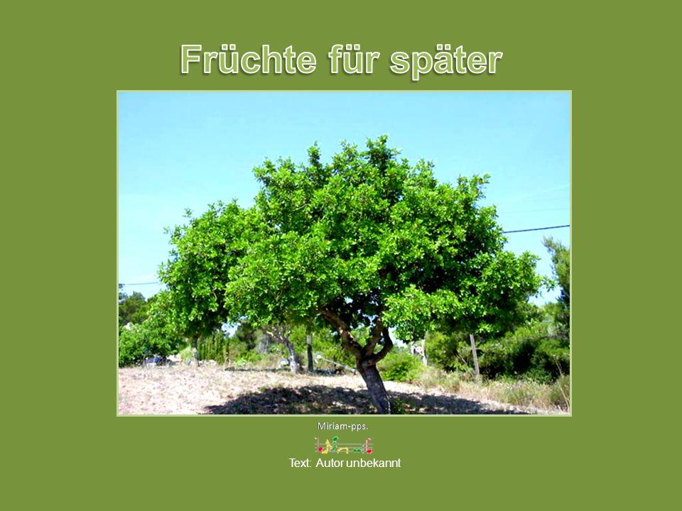 Früchte für später Text: Autor unbekannt