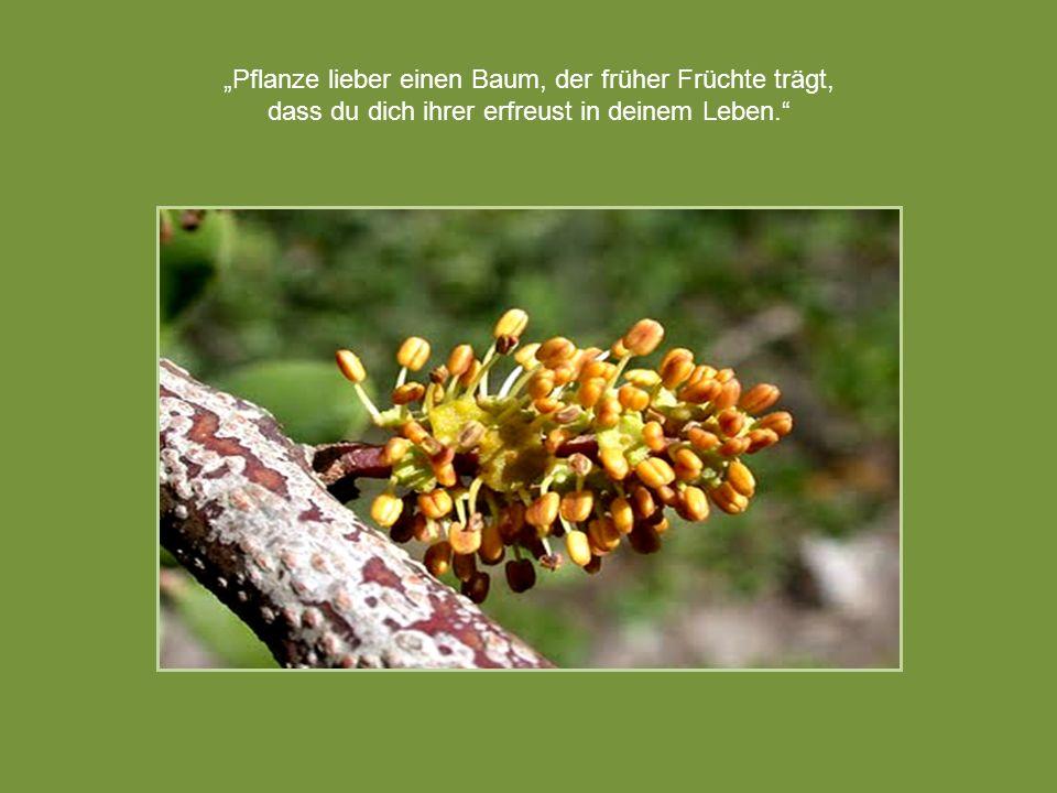 """""""Pflanze lieber einen Baum, der früher Früchte trägt,"""