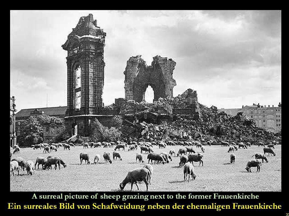 Ein surreales Bild von Schafweidung neben der ehemaligen Frauenkirche
