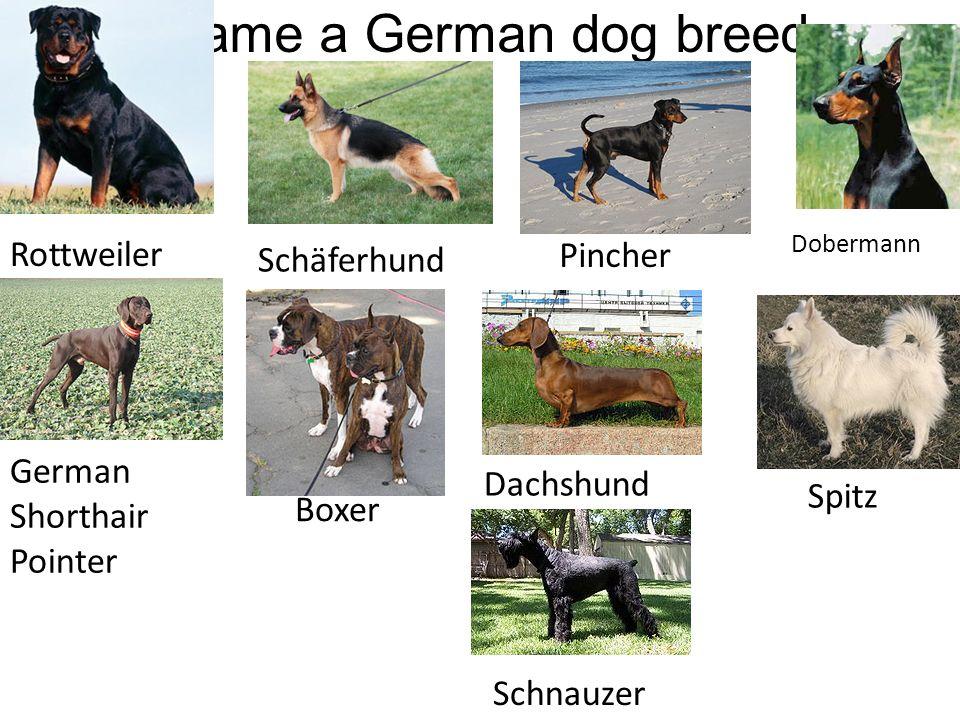 Name a German dog breed Rottweiler Pincher Schäferhund