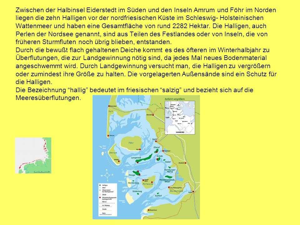 Zwischen der Halbinsel Eiderstedt im Süden und den Inseln Amrum und Föhr im Norden liegen die zehn Halligen vor der nordfriesischen Küste im Schleswig- Holsteinischen Wattenmeer und haben eine Gesamtfläche von rund 2282 Hektar.