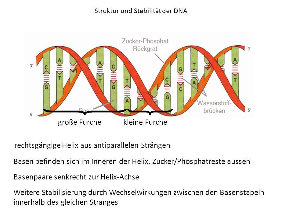 Struktur und Stabilität der DNA