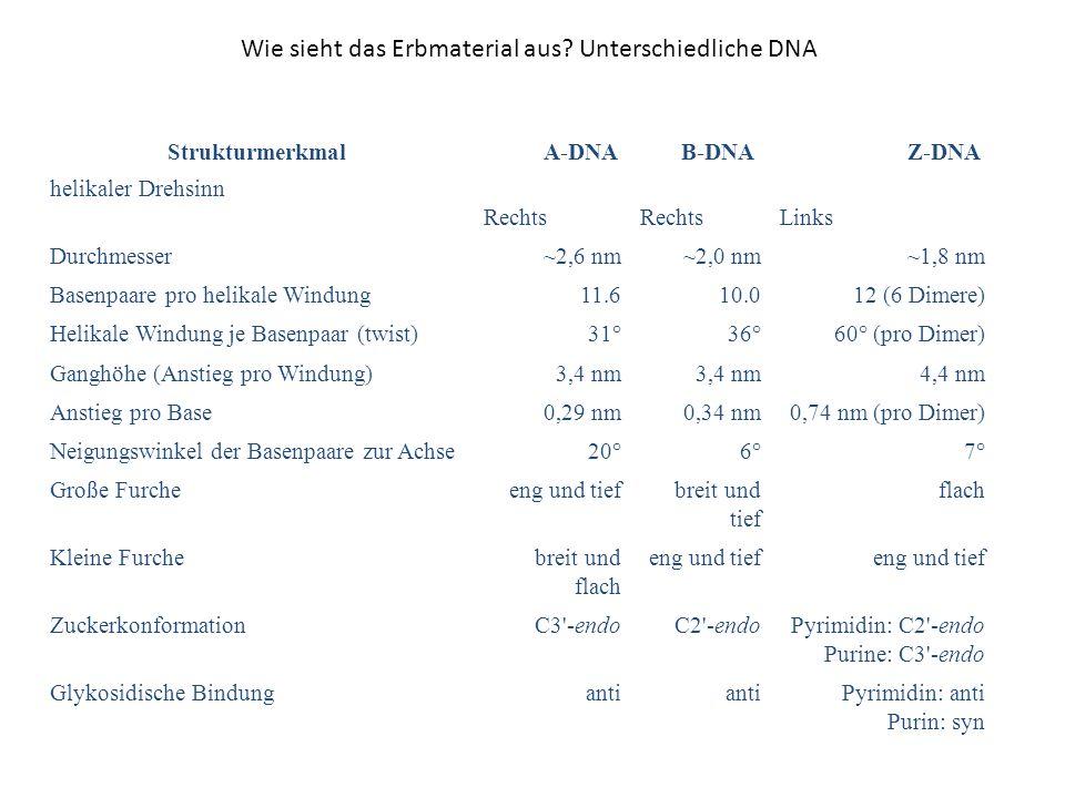 Wie sieht das Erbmaterial aus Unterschiedliche DNA