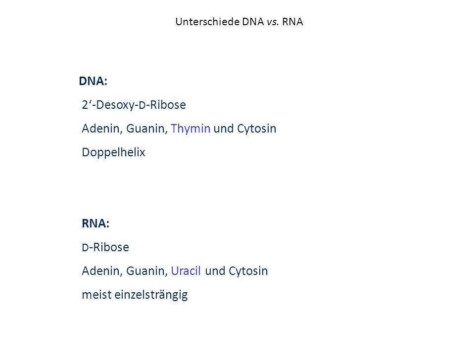 Unterschiede DNA vs. RNA