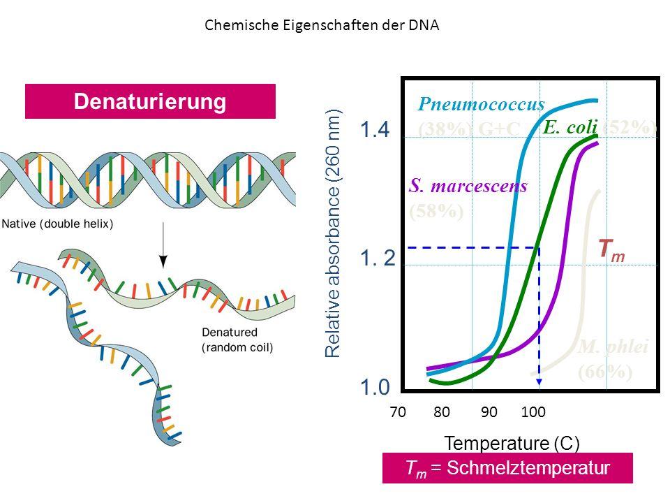 Tm Denaturierung 1.4 1. 2 1.0 Pneumococcus (38%) G+C E. coli (52%)