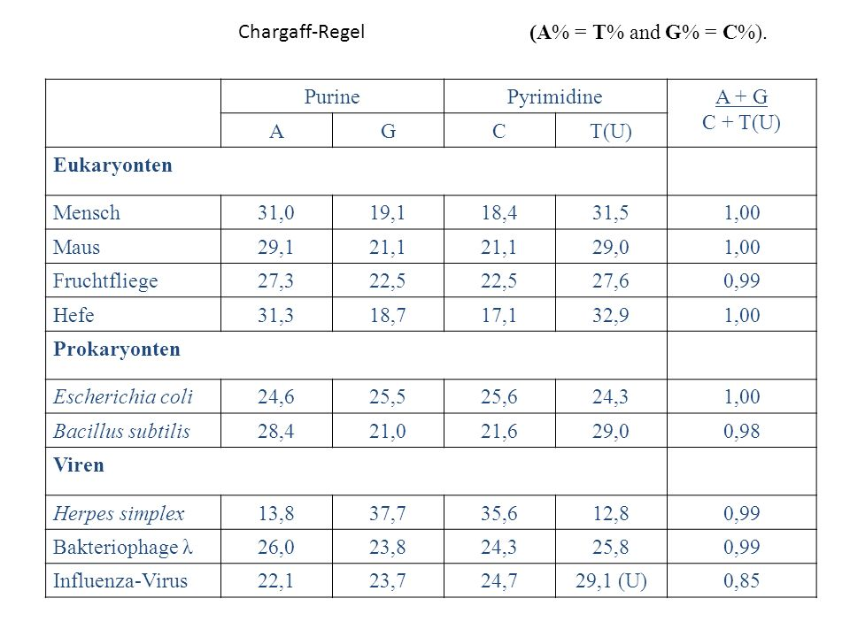 Chargaff-Regel (A% = T% and G% = C%). Purine. Pyrimidine. A + G. C + T(U) A. G. C. T(U) Eukaryonten.