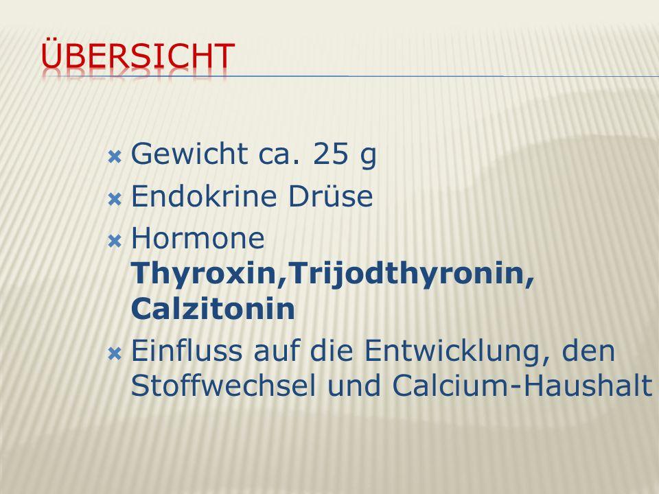 Übersicht Gewicht ca. 25 g Endokrine Drüse