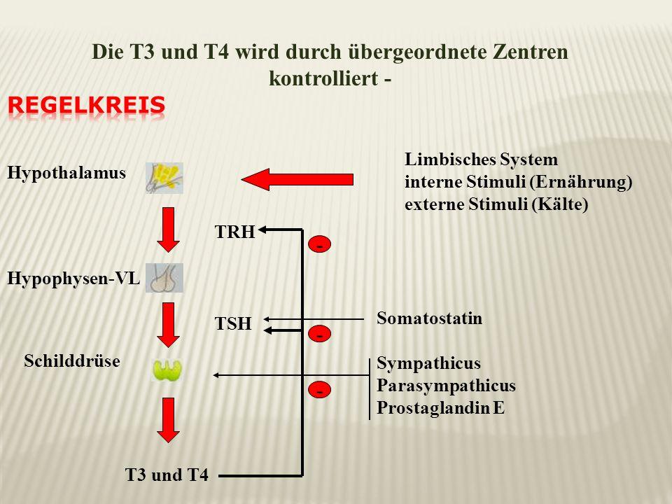 Die T3 und T4 wird durch übergeordnete Zentren kontrolliert -