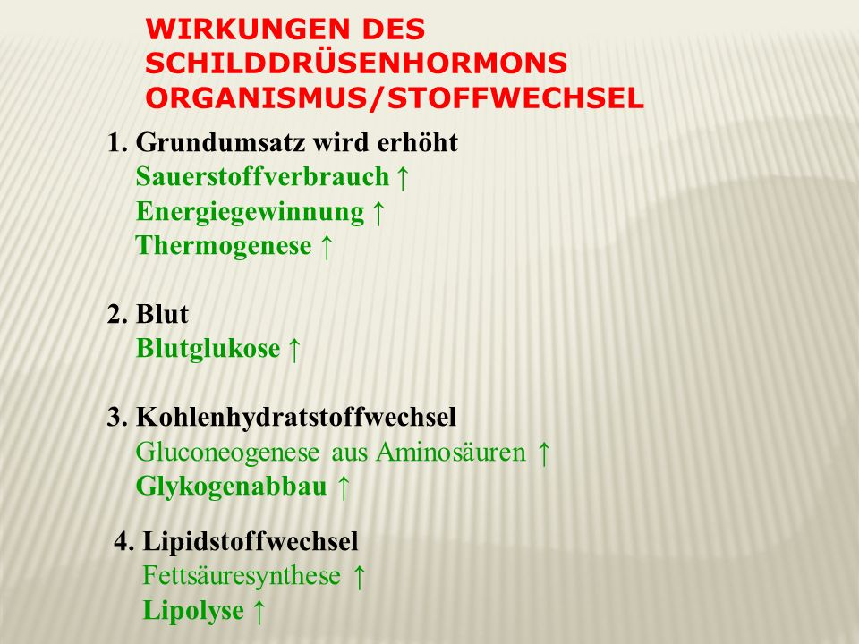 Wirkungen des Schilddrüsenhormons Organismus/Stoffwechsel