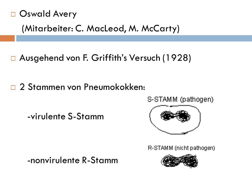 Oswald Avery (Mitarbeiter: C. MacLeod, M. McCarty) Ausgehend von F. Griffith's Versuch (1928) 2 Stammen von Pneumokokken: