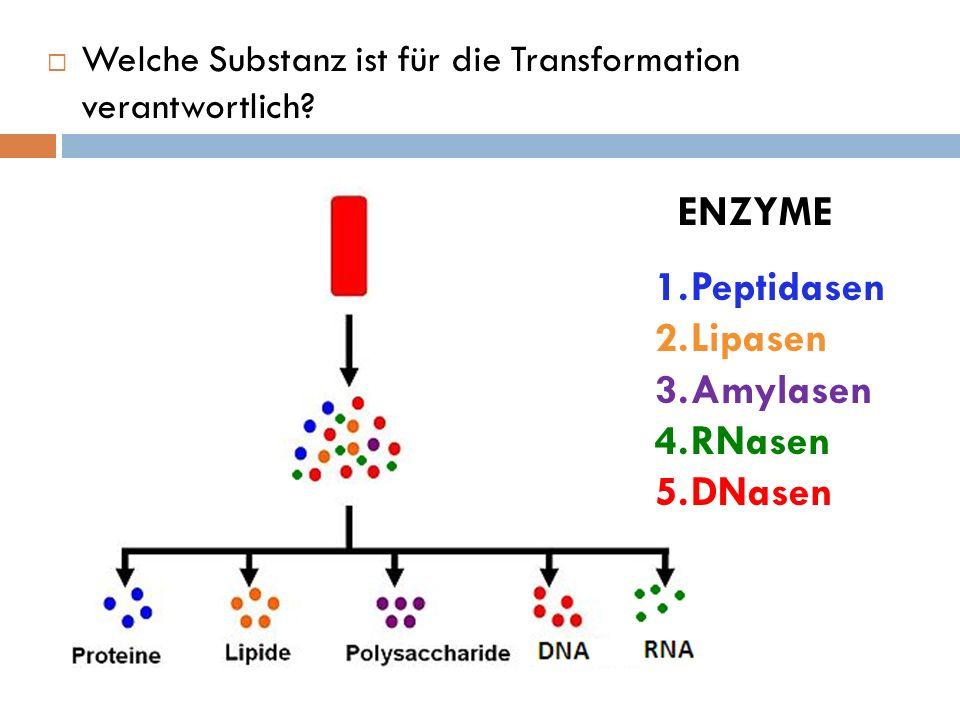 ENZYME Peptidasen Lipasen Amylasen RNasen DNasen