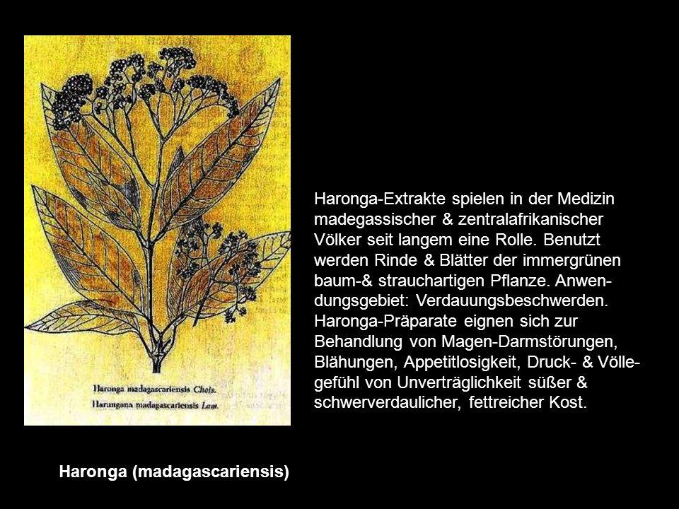 Haronga (madagascariensis)