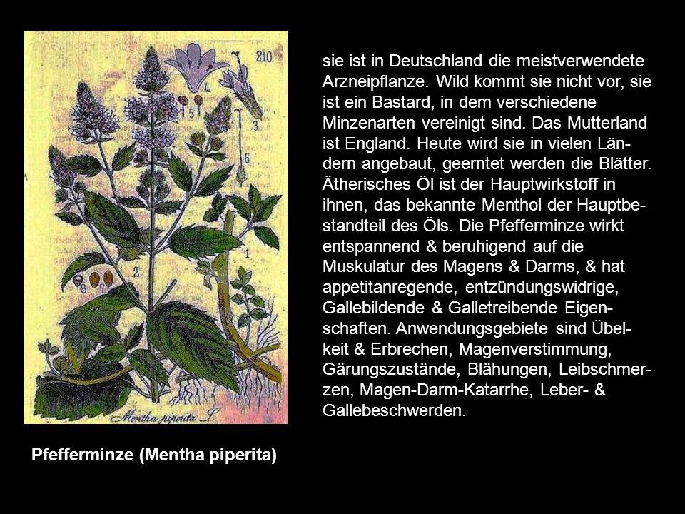 sie ist in Deutschland die meistverwendete Arzneipflanze