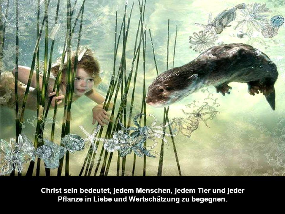 Christ sein bedeutet, jedem Menschen, jedem Tier und jeder Pflanze in Liebe und Wertschätzung zu begegnen.