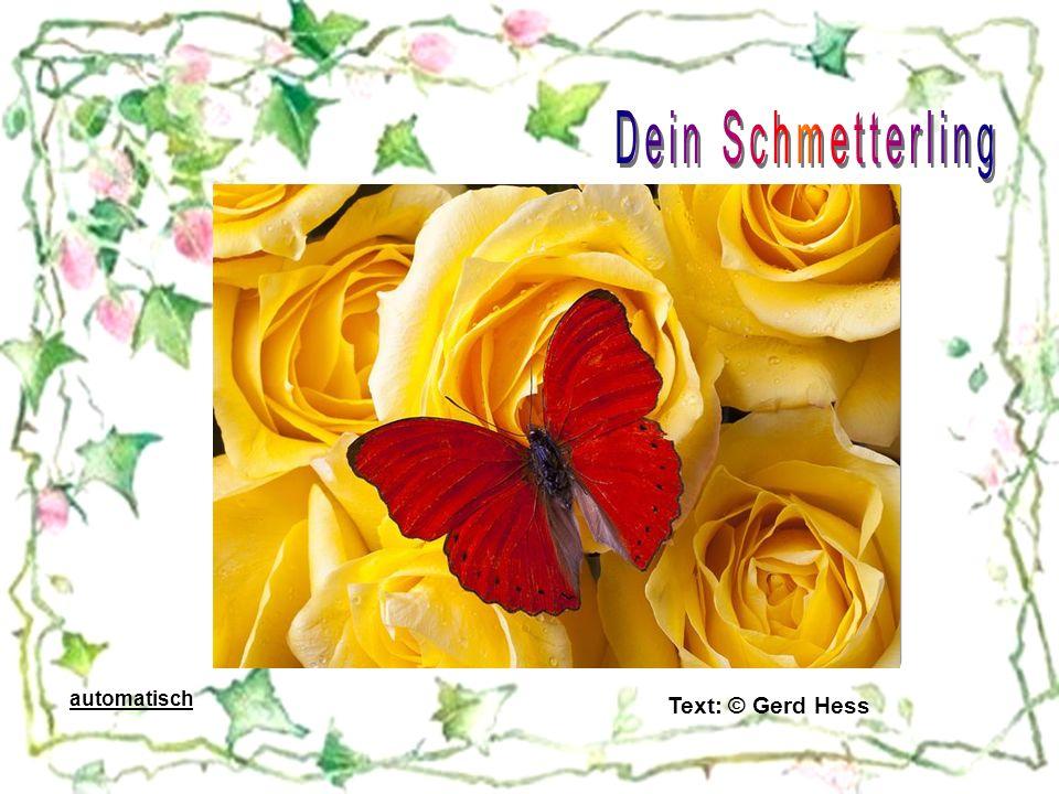 Dein Schmetterling automatisch Text: © Gerd Hess