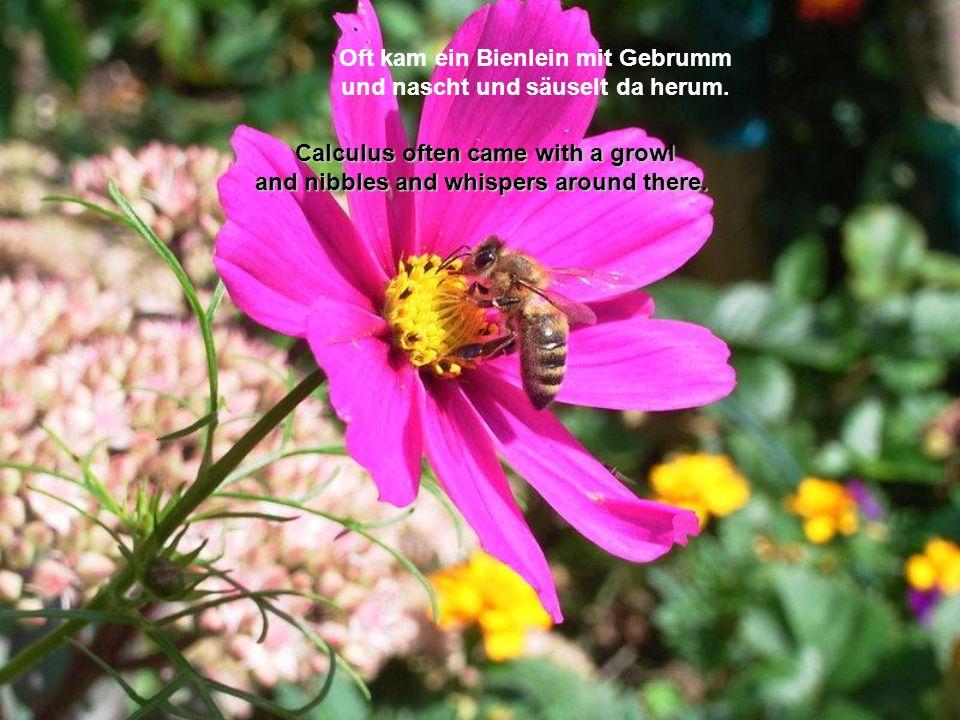 Oft kam ein Bienlein mit Gebrumm und nascht und säuselt da herum.