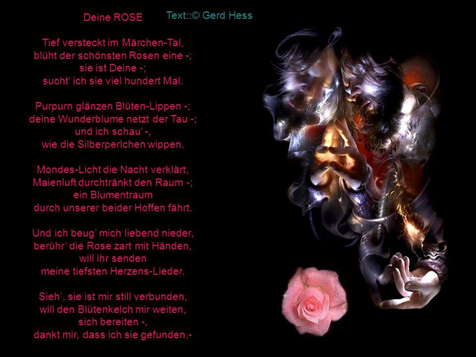 Deine ROSE Tief versteckt im Märchen-Tal, blüht der schönsten Rosen eine -; sie ist Deine -; sucht' ich sie viel hundert Mal. Purpurn glänzen Blüten-Lippen -; deine Wunderblume netzt der Tau -; und ich schau' -, wie die Silberperlchen wippen. Mondes-Licht die Nacht verklärt, Maienluft durchtränkt den Raum -; ein Blumentraum durch unserer beider Hoffen fährt. Und ich beug' mich liebend nieder, berühr' die Rose zart mit Händen, will ihr senden meine tiefsten Herzens-Lieder. Sieh', sie ist mir still verbunden, will den Blütenkelch mir weiten, sich bereiten -, dankt mir, dass ich sie gefunden.-