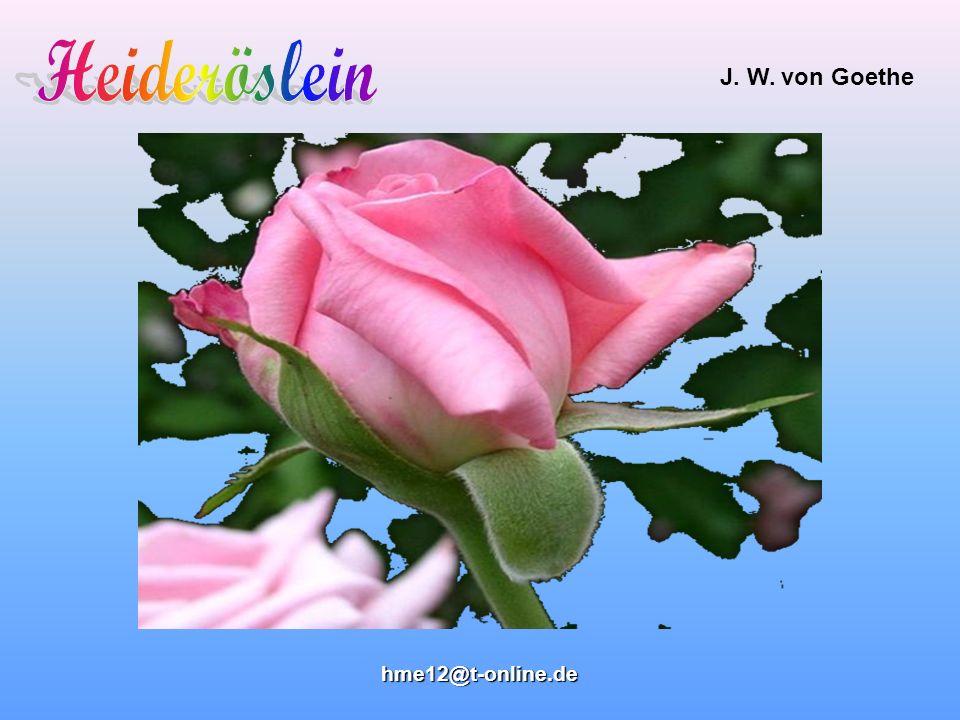 Heideröslein J. W. von Goethe hme12@t-online.de