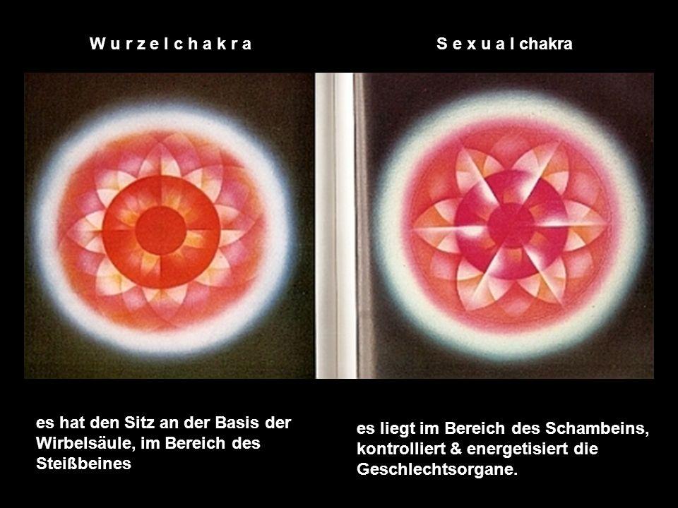 W u r z e l c h a k r a S e x u a l chakra. es hat den Sitz an der Basis der Wirbelsäule, im Bereich des Steißbeines.