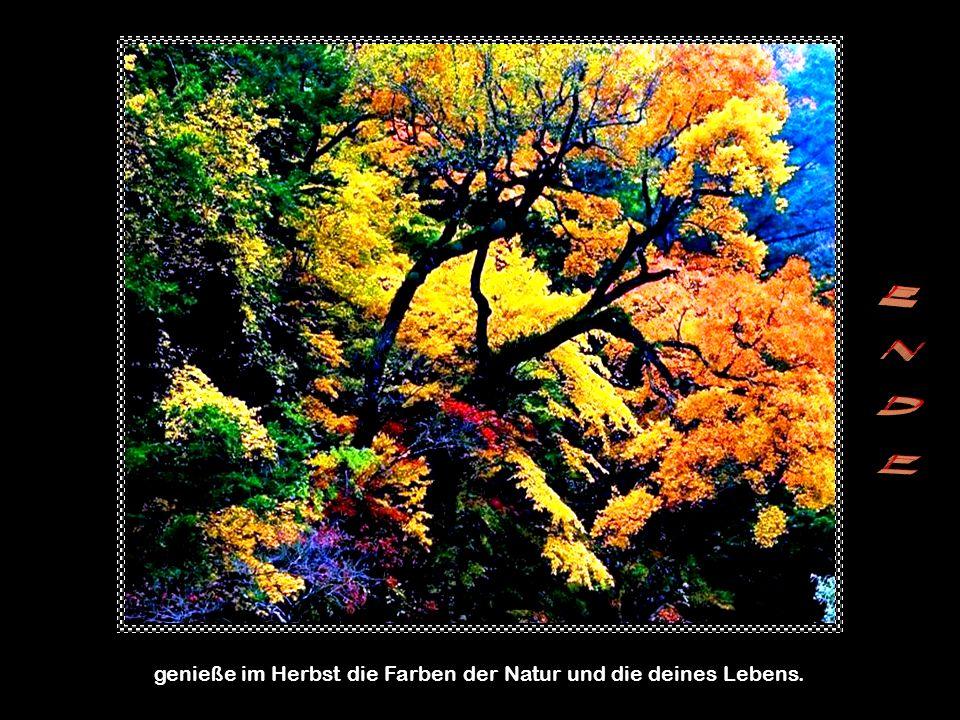 genieße im Herbst die Farben der Natur und die deines Lebens.