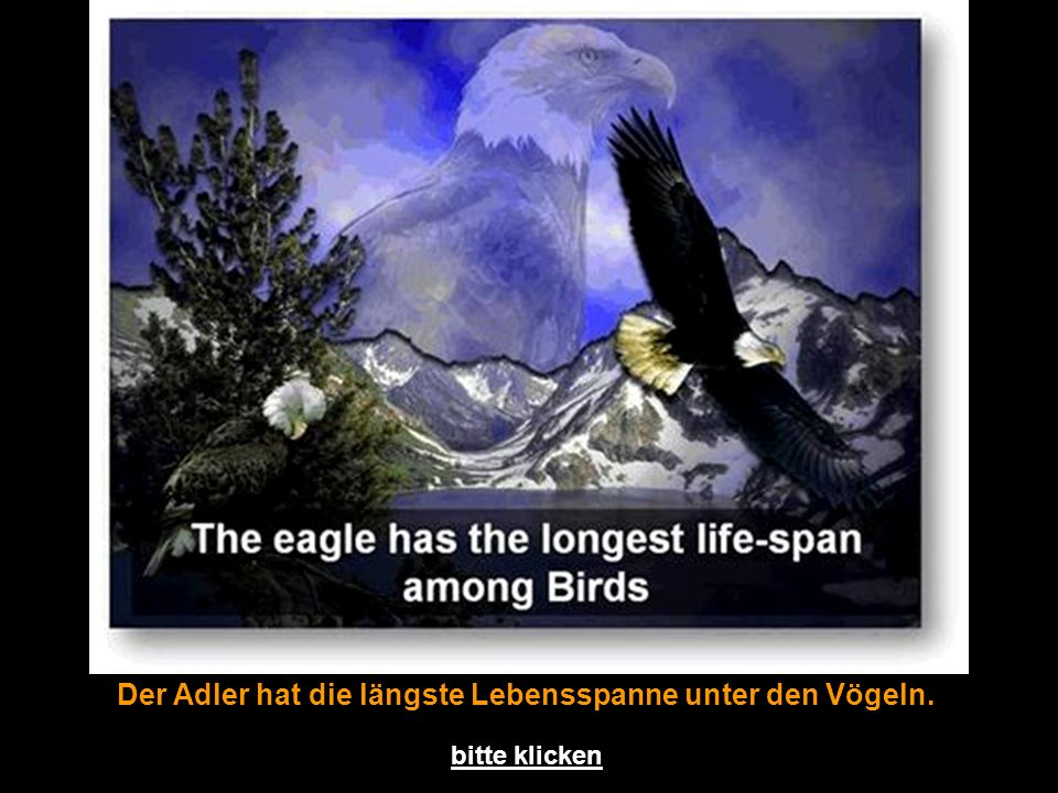 Der Adler hat die längste Lebensspanne unter den Vögeln.