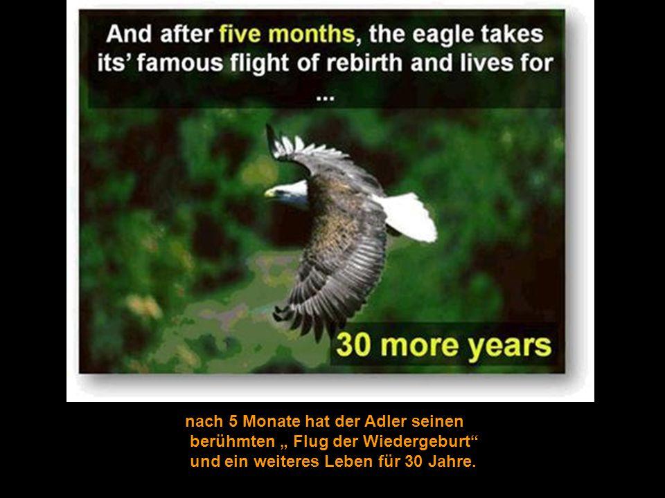 nach 5 Monate hat der Adler seinen