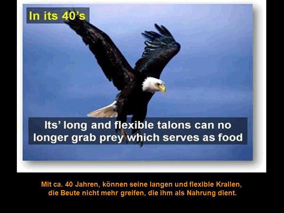 Mit ca. 40 Jahren, können seine langen und flexible Krallen,