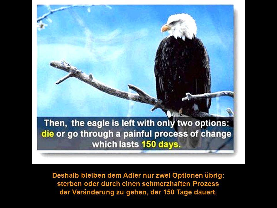 Deshalb bleiben dem Adler nur zwei Optionen übrig: