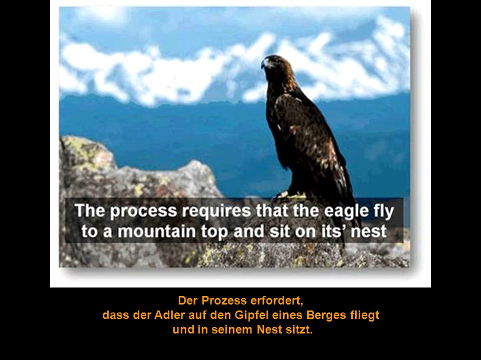 dass der Adler auf den Gipfel eines Berges fliegt
