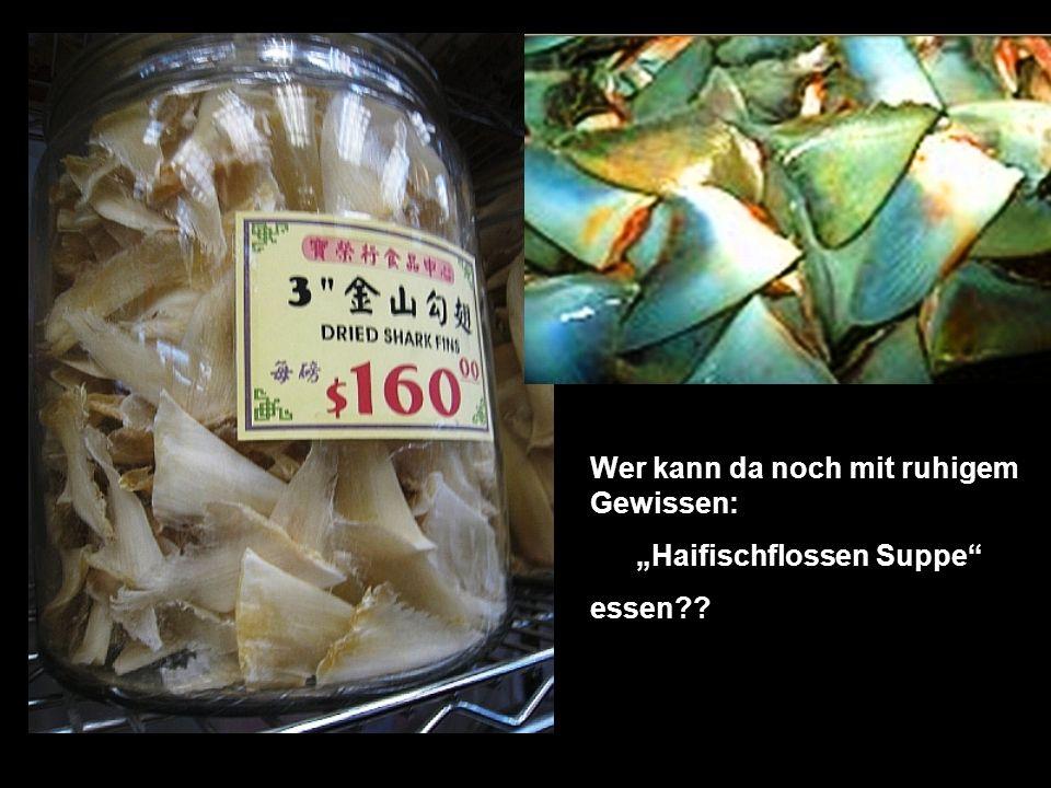 """""""Haifischflossen Suppe"""
