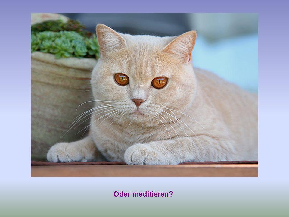 Oder meditieren