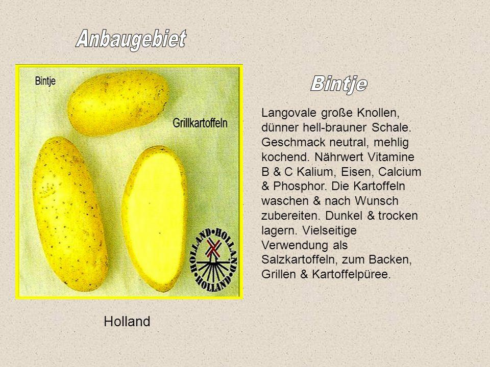 Anbaugebiet Bintje Holland