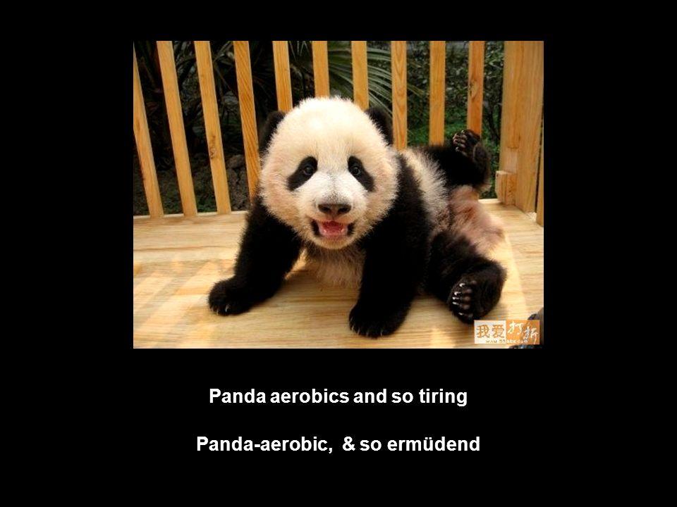 Panda aerobics and so tiring