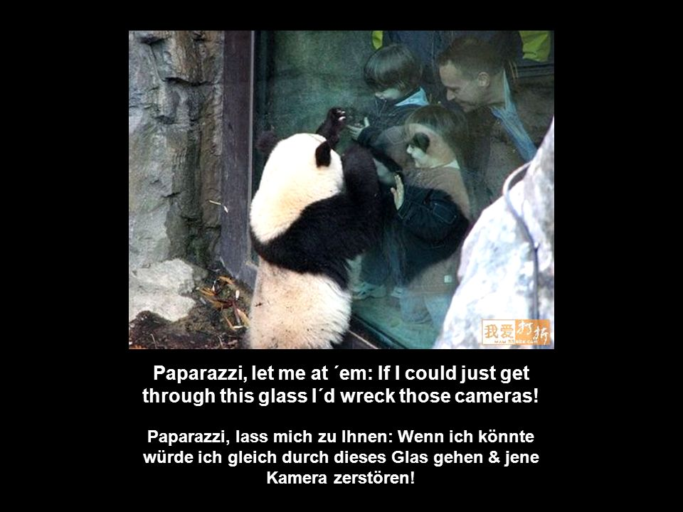 Paparazzi, let me at ´em: If I could just get through this glass I´d wreck those cameras!