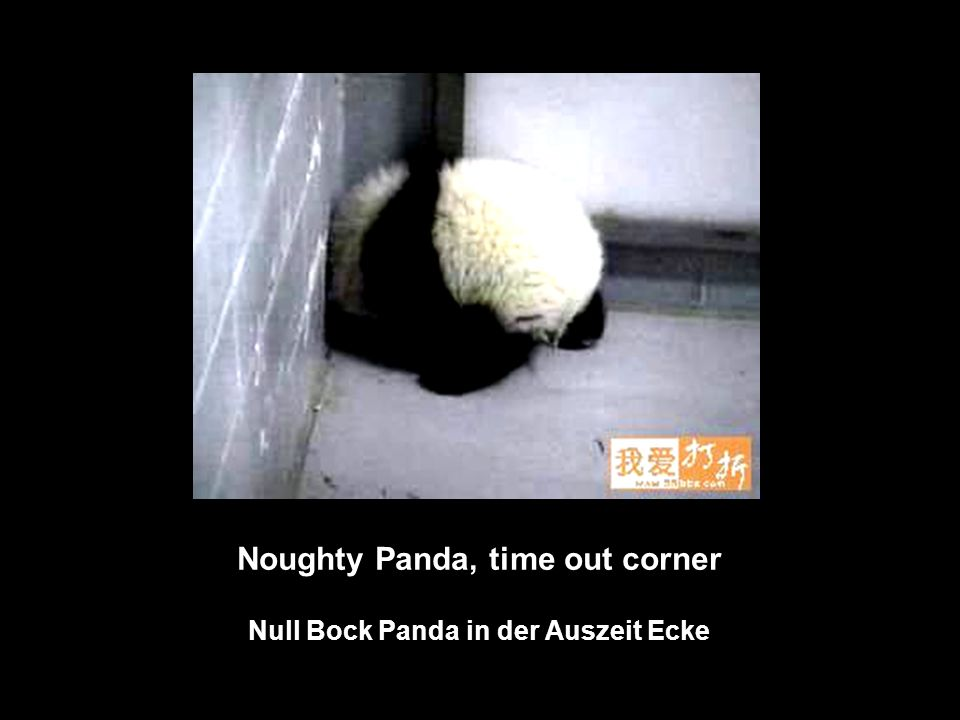 Noughty Panda, time out corner Null Bock Panda in der Auszeit Ecke