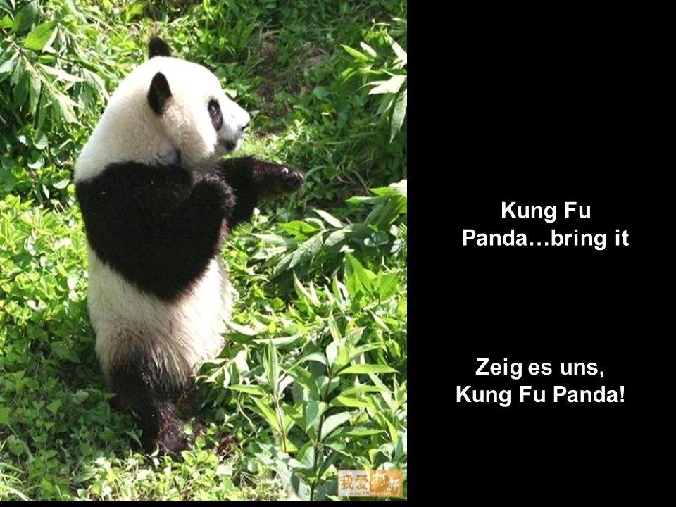 Zeig es uns, Kung Fu Panda!