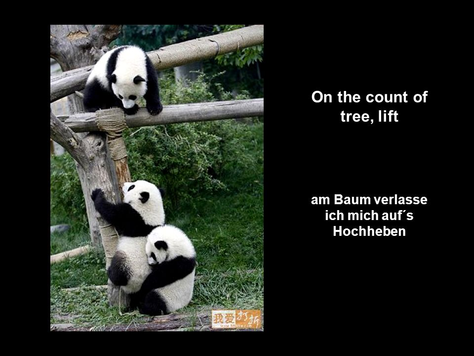 On the count of tree, lift am Baum verlasse ich mich auf´s Hochheben