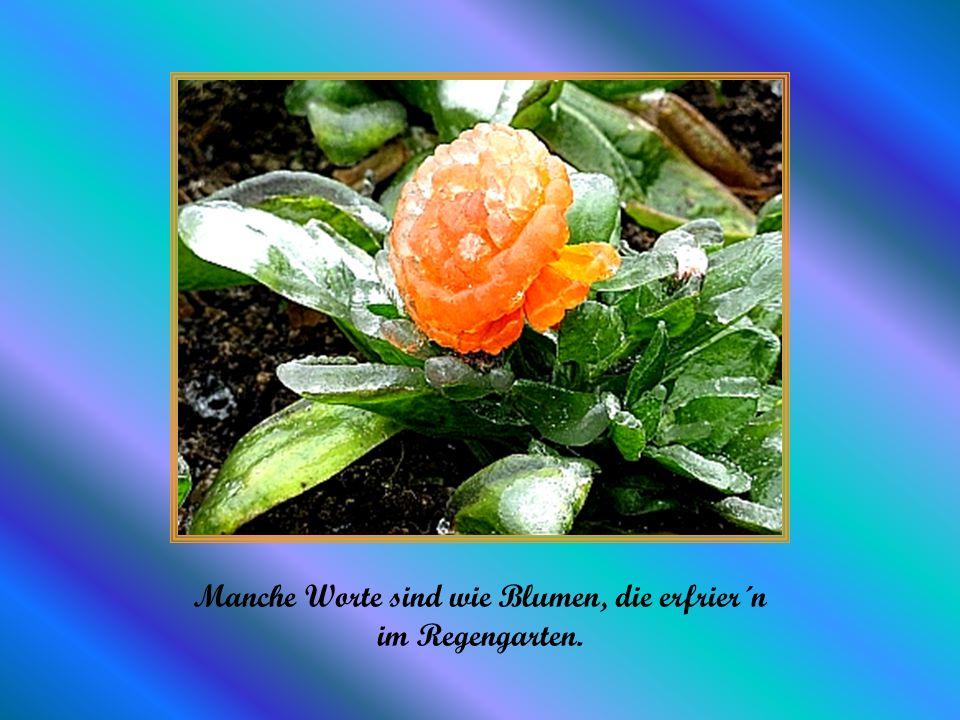 Manche Worte sind wie Blumen, die erfrier´n im Regengarten.