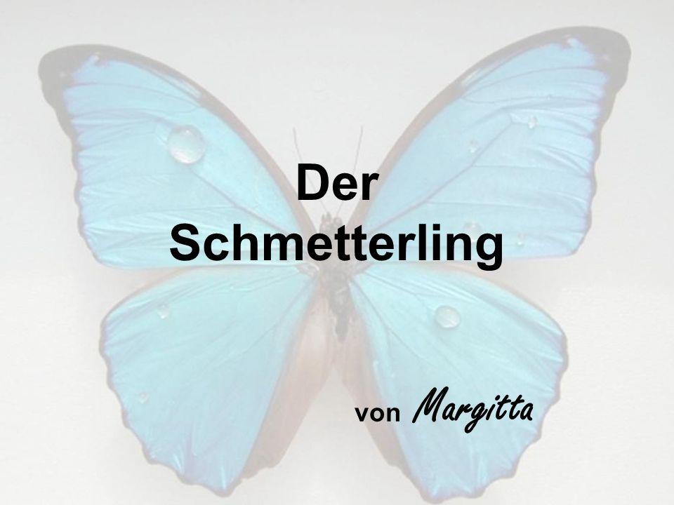 Der Schmetterling von Margitta