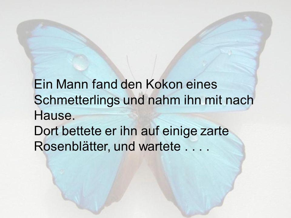 Ein Mann fand den Kokon eines Schmetterlings und nahm ihn mit nach Hause.