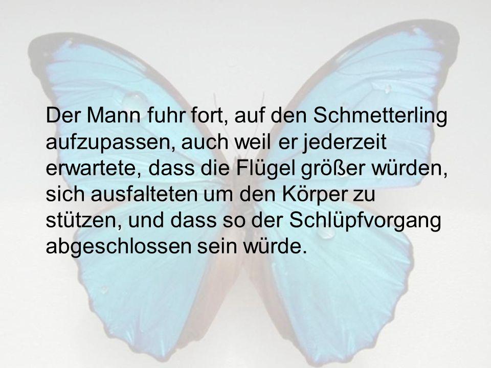 Der Mann fuhr fort, auf den Schmetterling aufzupassen, auch weil er jederzeit erwartete, dass die Flügel größer würden, sich ausfalteten um den Körper zu stützen, und dass so der Schlüpfvorgang abgeschlossen sein würde.