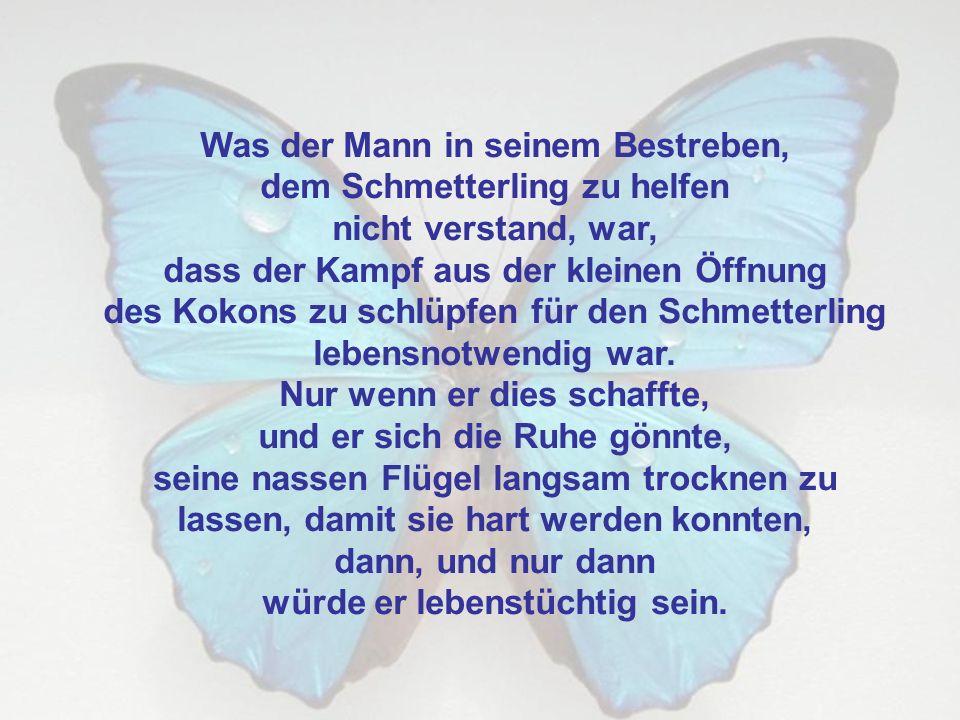 Was der Mann in seinem Bestreben, dem Schmetterling zu helfen