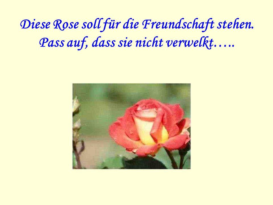 Diese Rose soll für die Freundschaft stehen