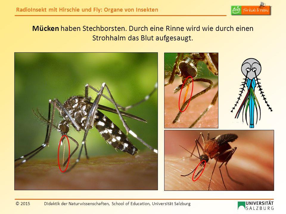 Mücken haben Stechborsten