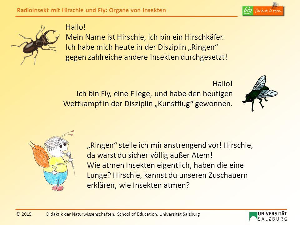 """Hallo! Mein Name ist Hirschie, ich bin ein Hirschkäfer. Ich habe mich heute in der Disziplin """"Ringen gegen zahlreiche andere Insekten durchgesetzt!"""