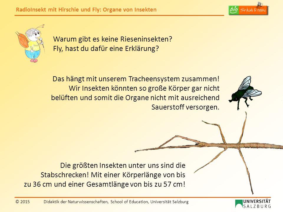 Warum gibt es keine Rieseninsekten