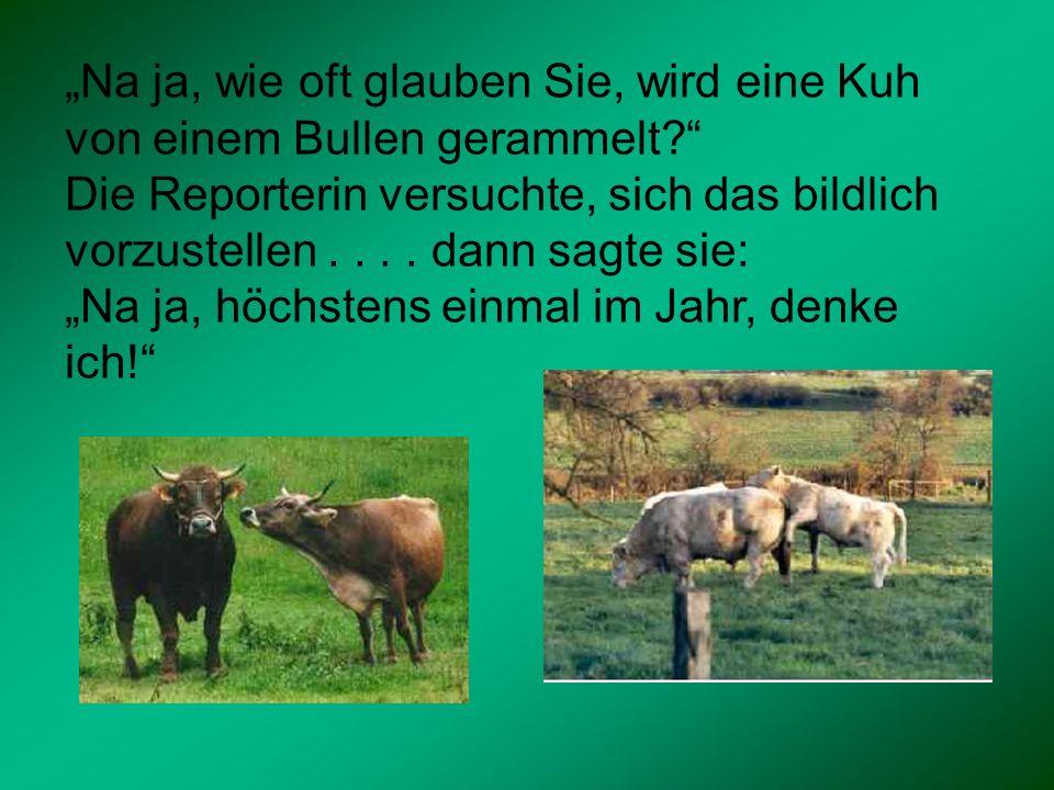 """""""Na ja, wie oft glauben Sie, wird eine Kuh von einem Bullen gerammelt"""