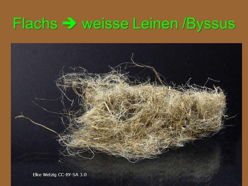 Flachs  weisse Leinen /Byssus