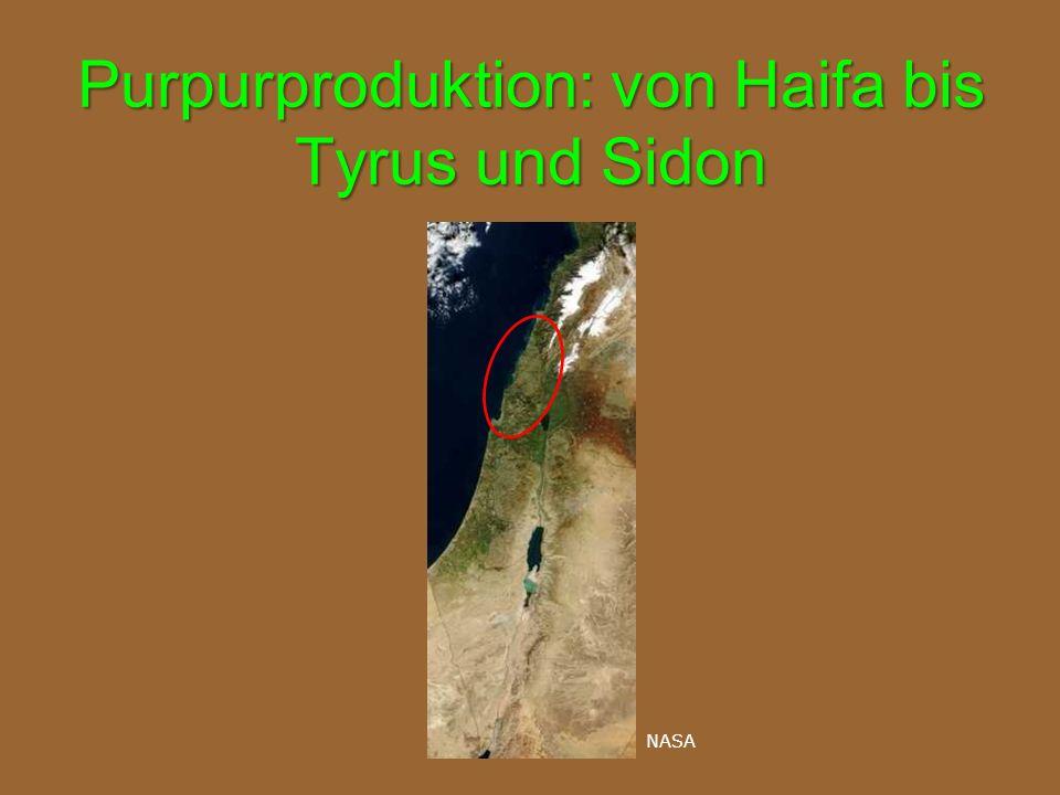 Purpurproduktion: von Haifa bis Tyrus und Sidon