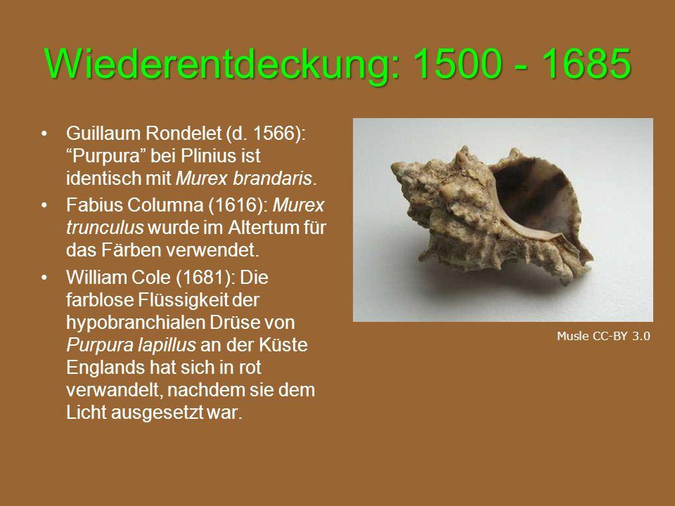Wiederentdeckung: 1500 - 1685 Guillaum Rondelet (d. 1566): Purpura bei Plinius ist identisch mit Murex brandaris.